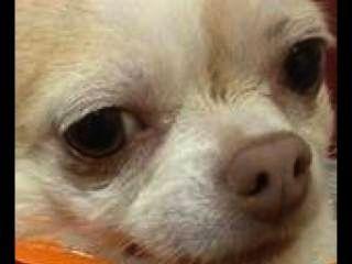 Cheeto Hund Bande Aerdris